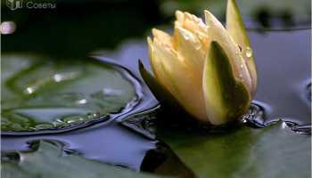 Как чистить пруд на даче своими руками