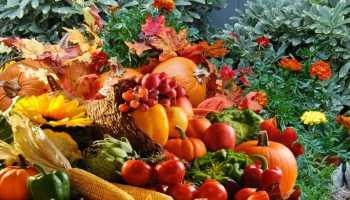 Нужно ли вскапывать огород осенью