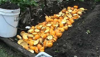 Апельсиновые корки применение в огороде