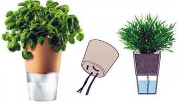 Как полить цветы при длительном отсутствии